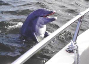 Dolphin01s