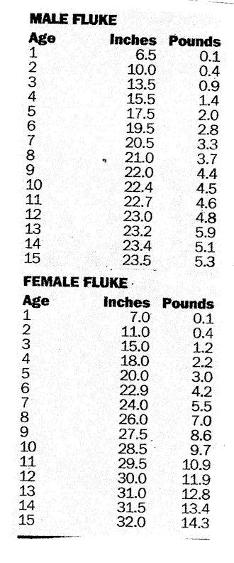 Fluke_Size