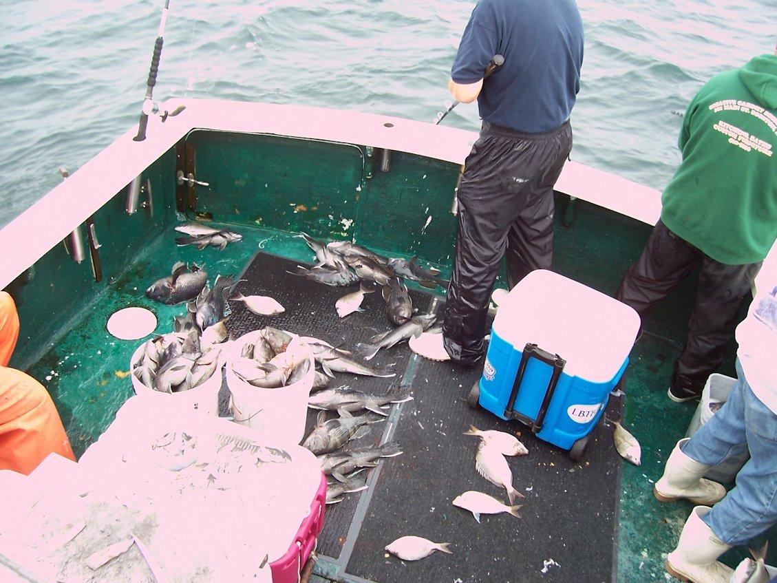 Mass_Fishing