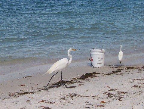 shell_beach_42209
